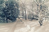 stock photo of snow forest  - Photographed with a 590mm near infrared converted camera of a long snow cleared driveway leading to a house in a forest covered in snow after a snow storm in the winter - JPG
