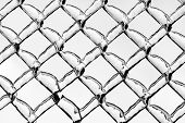 pic of chain link fence  - A close up shot of thick layer of ice covering a frozen metal chain link fence after an ice storm - JPG