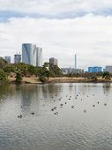 picture of duck pond  - Pond with ducks in a park in Tokyo - JPG
