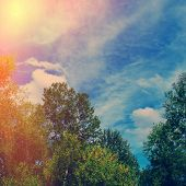 image of steppes  - forest and steppe landscape  autumn season day - JPG