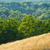 stock photo of steppes  - forest and steppe landscape autumn season daylight day - JPG