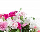 pic of carnation  - Pink and white carnation flowers isolated on white background - JPG