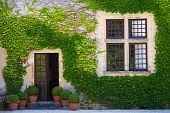 image of green wall  - Ivy clad house photographed in the Dordogne region of France - JPG