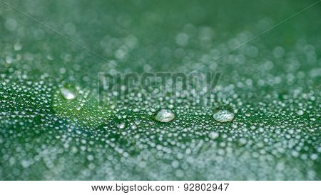 Dew Drops Lining Up