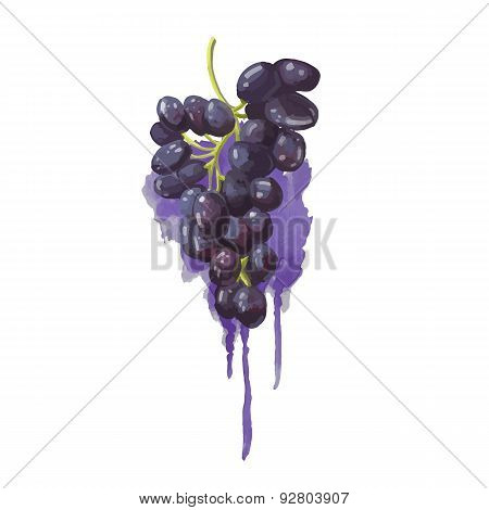 Grapes in a watercolor style with purple watercolor splashes. Juicy, bright blob. Vector.