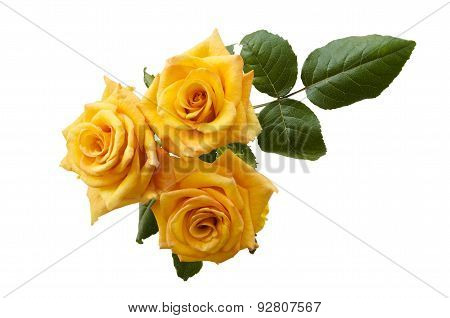 Beautiful Three Yellowish Orange Roses Isolated On White Background