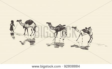 Caravan Camels Desert Vector Illustration Sketch