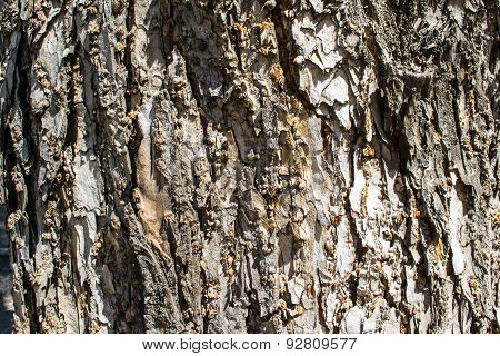 Background bark