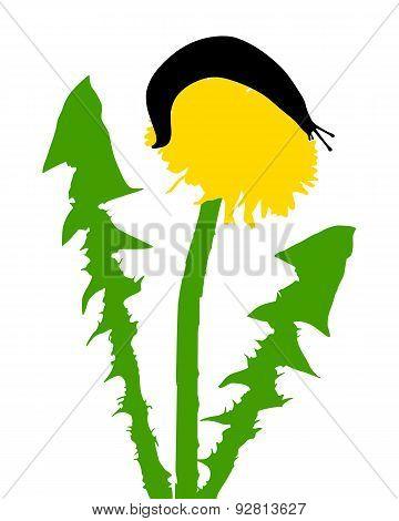Slugs On Dandelion