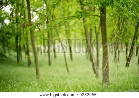 green blurred landscape, forest, eco badge, ecology label, nature view.