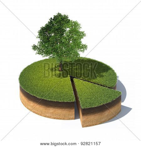 Cross Section Of Ground With Grass And Tree