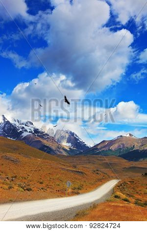 Summer day in the national park Torres del Paine, Patagonia, Chile. Andean condors fly over the lake Pehoe