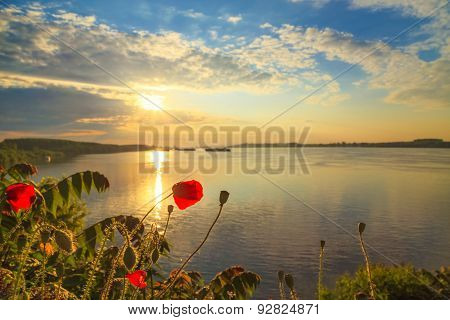Poppies On The Danube Bank In The Spring