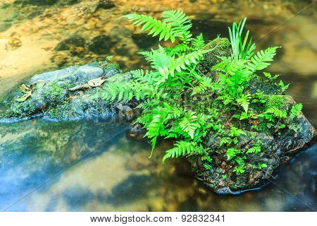 Vegetable Fern And Green Grass On Stone In Stream.