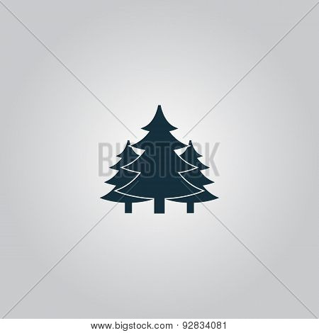 Tree, Christmas fir tree