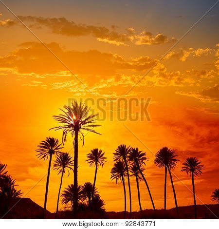 Almeria in Cabo palm trees in Rodalquilar beach at Mediterranean Spain