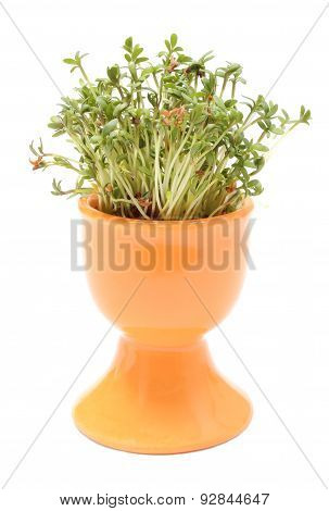 Fresh Green Watercress In Orange Cup. White Background