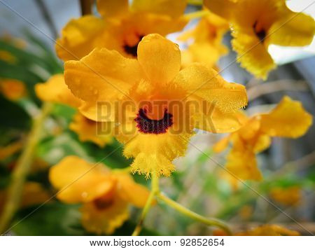 Beutiful Orchid