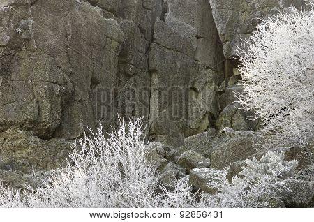 snowfall in the forest, Moncayo Natural Park, Saragossa, Aragon, Spain