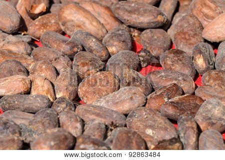 Cocoa raw seeds