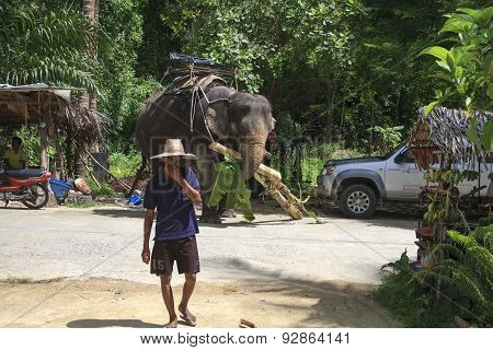Young Thai Elephant Rider Feeding His Elephant With Bananas