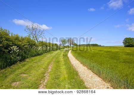 Grassy Yorkshire Wolds Footpath