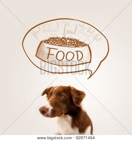 Cute brown and white border collie thinking about a bowl of food in a thought bubble above his head