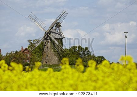 Windmill Seelenfeld (petershagen, Germany) With Colza Field