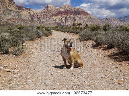 Bulldog on the hiking trail