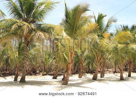 Saona Island, Caribbean Beach