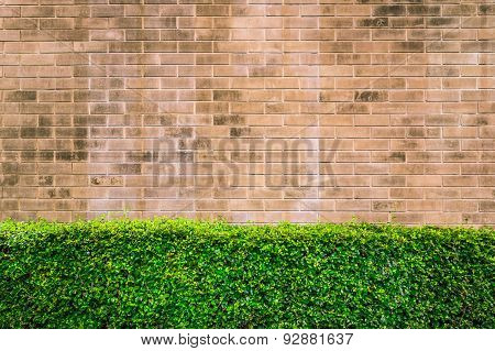 Vintage Style Decorative Brown Brick Wall With Plant
