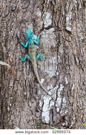 Chameleon On Tree