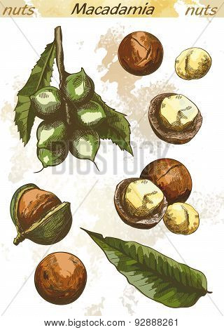 macadamia nut color