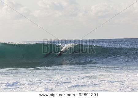 Dolphins Surfing Wave