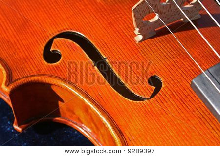 viola closeup