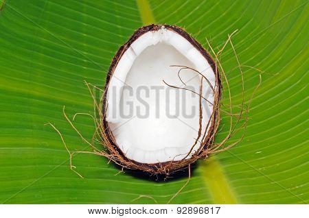 Half a coconut.