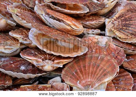 France, Scallops At The Market Of Le Touquet Paris Plage