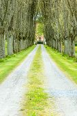 pic of tree lined street  - Avenue up to gates of house - JPG