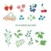 picture of strawberry plant  - Set of berries - JPG
