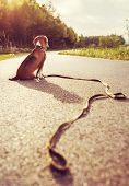 stock photo of lost love  - Lost dog sitting on the road alone - JPG