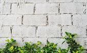 pic of creeper  - Green Creeper Plant On White Block Wall Background Texture - JPG