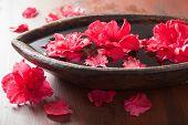 foto of azalea  - azalea flowers in bowl for aromatherapy spa - JPG