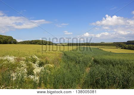 Oats And Canola Crops
