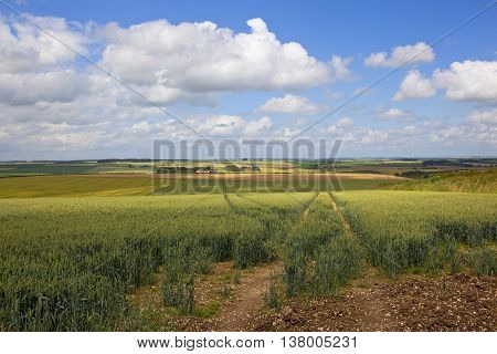 Yorkshire Wolds Oat Fields
