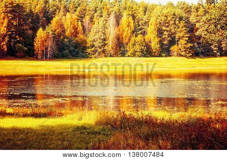 Autumn landscape of Soroti river and autumn yellowed forest trees in Pushkinskiye Gory, Russia - autumn sunny landscape of autumn forest nature lit by bright autumn sunlight. Soft focus applied