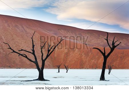 Dead trees and red dunes in the Dead Vlei Sossusvlei Namibia