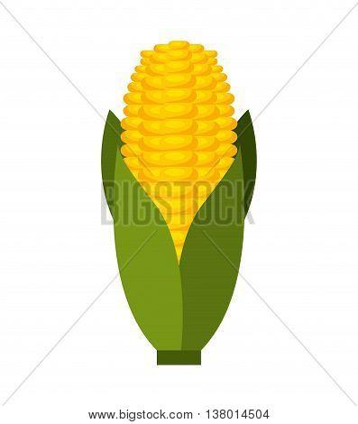 corn cob isolated icon design, vector illustration  graphic