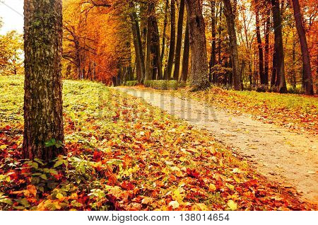 Picturesque autumn landscape view of deserted autumn park with fallen autumn leaves soft filter applied -autumn landscape in cloudy weather with yellowed autumn trees along lonely autumn alley