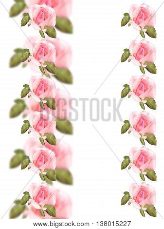 Delicate floral pattern of pink roses isolated
