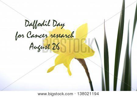 Daffodil Day Greeting